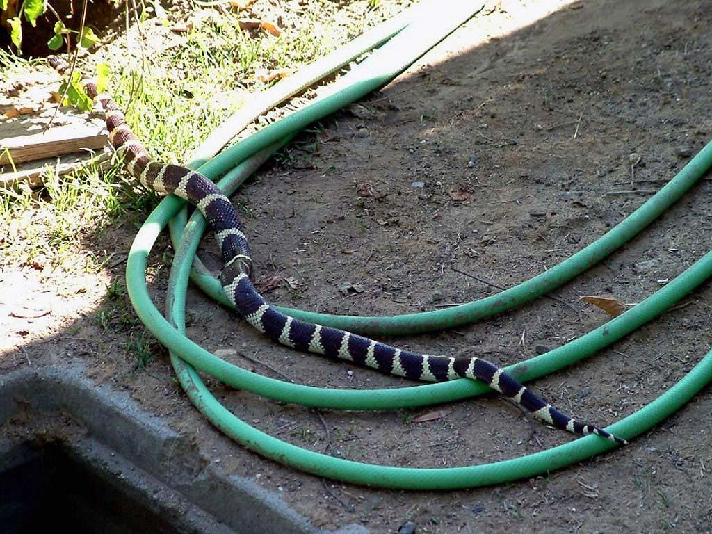 Как сделать змею из подручных материалов