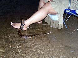 Змеи между ног фото фото 407-25