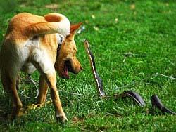 http://bluesbag2.narod.ru/2010z-snake-393.jpg